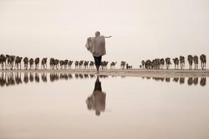 Un minatore di sale conduce un gruppo di cammelli verso la miniera, regione di Afar, Etiopia. (Joel Santos / www.typoty.com)